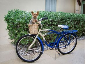 bike and dog